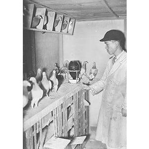 伝書鳩の飼育小屋